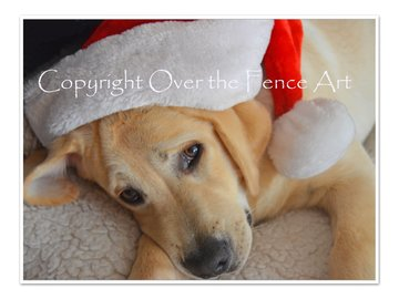 Selling: Labrador Art Christmas Greeting Card