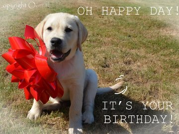 Selling: Oh Happy Day Labrador Birthday Card