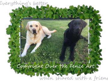 Selling: Best Friend Labradors Photo Greeting Card