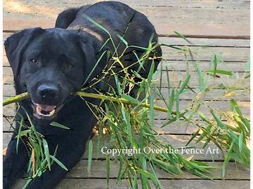 Selling: Funny Labrador Photo Greeting Card