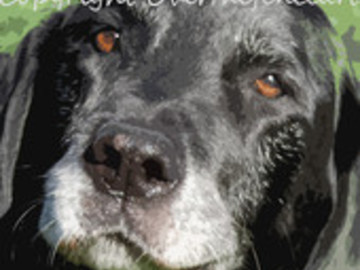 Selling: Sweet Black Labrador Photo Greeting Card