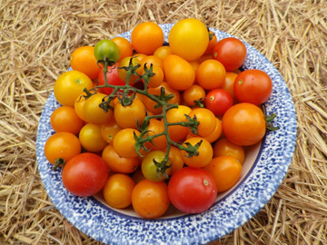 Free: Amy's Apricot Mix Cherry tomato