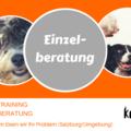 Dienstleistung: Einzelberatung/Einzeltraining für Menschen mit Hund