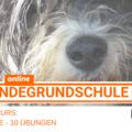 Produkt: Hundegrundschule, E-Mailkurs