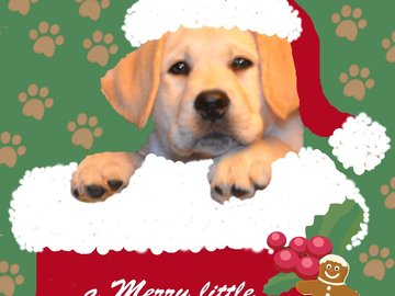 Selling: Christmas Card Baby Labrador in Stocking