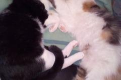 Dienstleistung: Katzenbetreuung