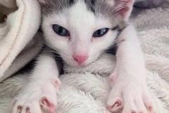 Dienstleistung: Tiersitter Linz und Umgebung