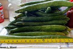pay online or by mail: Japanese Long Pickling cucumber