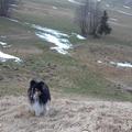 Dienstleistung: Tiersitter Innsbruck