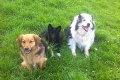 Dienstleistung: Bachblütentherapie Tiere Online