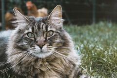 Dienstleistung: Mobile Tierbetreuung Wien