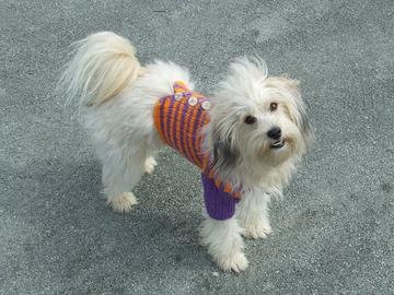 Sale retail: manteau pour chiens tricoté mains