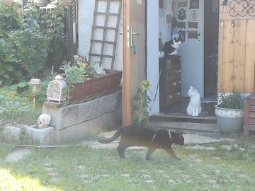 Dienstleistung: Tiersitter Graz und Graz Umgebung
