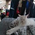 Urlaubsbetreuung: Urlaubsbetreuung für Katzen in Graz