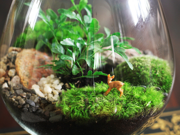 22 Credits: Build Your Own Terrarium