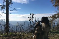 Urlaubsbetreuung: Urlaubsbetreuung Hunde (nach Absprache) Graz & Weiz-Gleisdorf