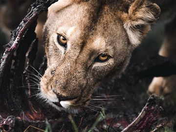 Offering with online payment: Tanzania Wild life experience