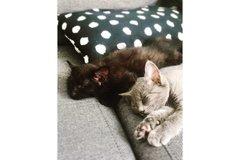 Dienstleistung: Katzenbetreuung Graz, Graz-Umgebung