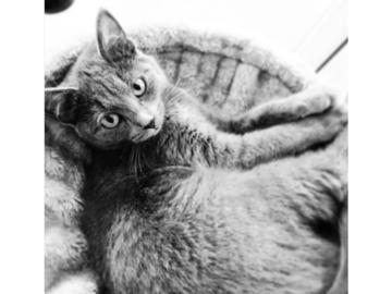 Urlaubsbetreuung: Urlaubsbetreuung für Katzen, Graz u. Graz-Umgebung