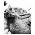 Dienstleistung: Katzenbetreuung für Katzen, Graz u. Graz-Umgebung