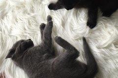 Dienstleistung: Tagesbetreuung Katzen, Graz u. Graz-Umgebung