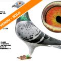 Vente avec paiement en ligne: FR 2018-207775 : A. SAARLOOS & Zn. 775 - 100 % A. SAARLOOS & Zn.