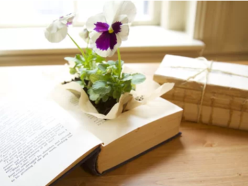 Workshop Angebot (Termine): Vintage Book Planter