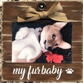 Selling: Our Fur Baby or My Fur Baby Frame
