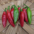 pay online or by mail: Balik (Erdinc Strain) hot pepper