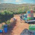 Buy Experiences: Ashkar Wine Tasting