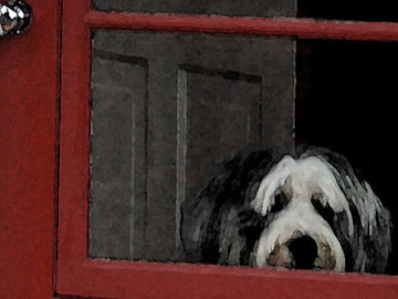 Selling: Adorable Bearded Collie Waits at the Window for you! Card.