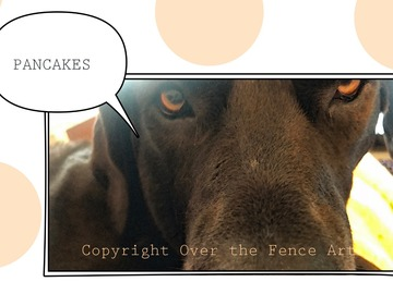 Selling: Great Dane Demands Pancakes! Photo Greeting Card