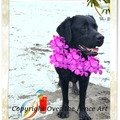 Selling: Funny Labrador Greets you at the Beach! Photo Card
