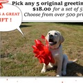Selling: Set of 5 Greeting Cards. You pick from over 500 original photos!