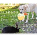 Selling: Generous Labrador Shares his Easter Basket with Bunny!