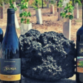 Buy Experiences: Wine Aroma Workshop & Tour