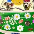 Selling: Celebrating Labradors Ride in a VW van