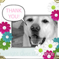 Selling: Thank you greeting card. Labrador extends a thank you.