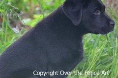 Selling: Beautiful Black Labrador Puppy Photo Greeting Card