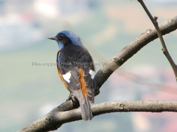 Offering with online payment: Godawari Birds