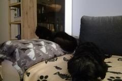 Urlaubsbetreuung: Urlaubsbetreuung Hunde, Graz