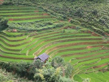 Réserver (avec paiement en ligne): Ethnies et rizières du Nord - Vietnam