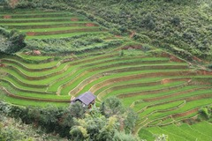 Réserver (avec paiement en ligne): Ethnies et rizières du Nord - 4p - Vietnam