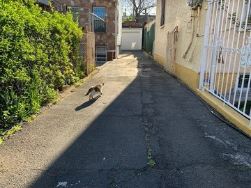 Daily Rentals: East New York Private Driveway, Daily Parking Near Trains