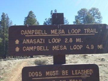 Daily Rentals:  Flagstaff AZ,  Driveway Parking-Quiet, Safe Near Hiking Trails.