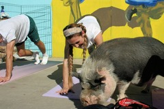 Request To Book & Pay In-Person (hourly/per party package pricing): Happy Piggy & Bunny Yoga Semi-Private or Private Parties