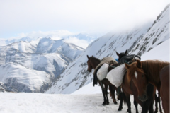 Demande de devis: Equestrian expedition in Tusheti - Georgia