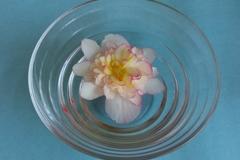 Ilmoitus: Pienet lasikulhot 10 kpl tarjoiluun tai koristeluun