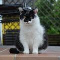 Dienstleistung: Tierbetreuung Graz & Graz Umgebung