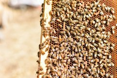 Coaching Session: Beekeeping Coaching